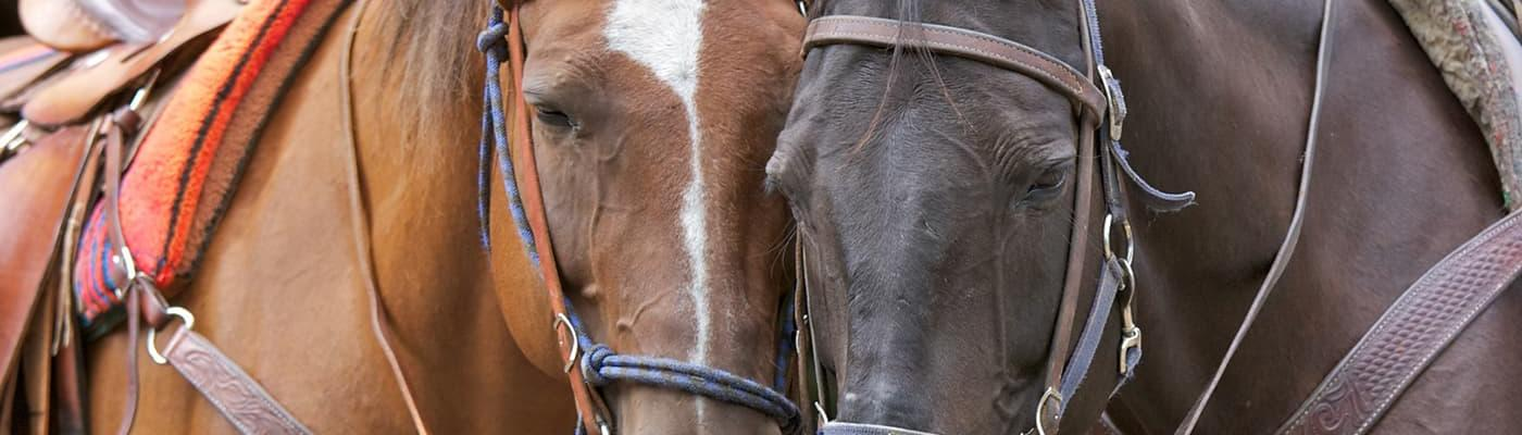Horseback Riding and Trail Ride Injuries